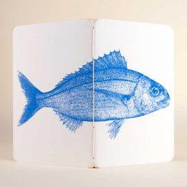 Notebook <br>Besugo / <em>Sea Bream</em>
